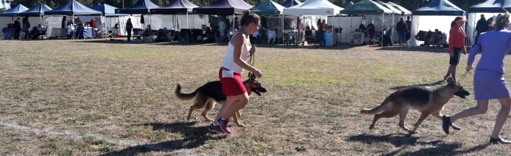 Warragul Dog Club