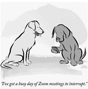 This image has an empty alt attribute; its file name is Dogs-Busy-Day-on-Zoom.jpg